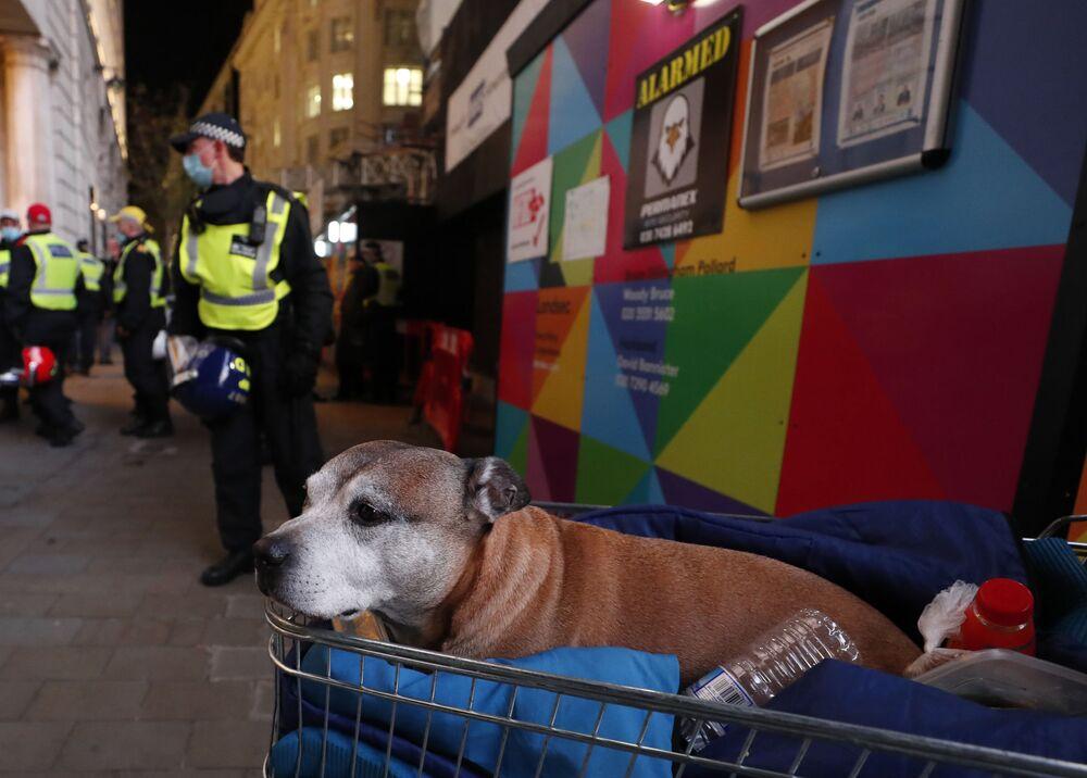 Un cane riposa in un carrello della spesa mentre gli agenti di polizia pattugliano le strade durante la Marcia del Milione di Maschere a Londra, il 5 novembre 2020.