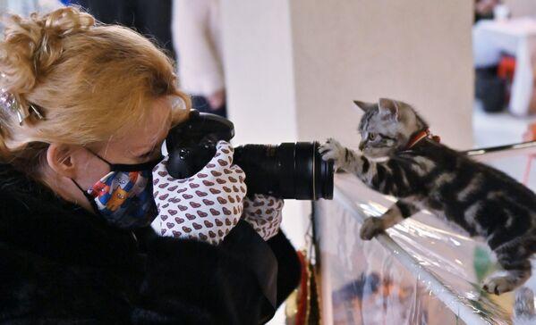 Una fotografa fa le foto ad un gattino di razza scottish straight nel corso della mostra di gatti KoShariki Show svoltasi a Mosca.  - Sputnik Italia