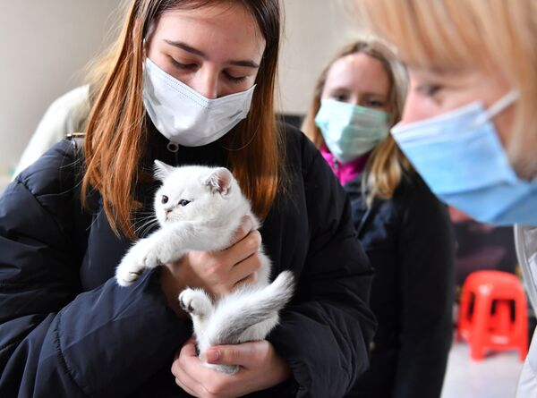 I visitatori della mostra KoShariki Show tengono in braccio un gatto, Mosca.  - Sputnik Italia