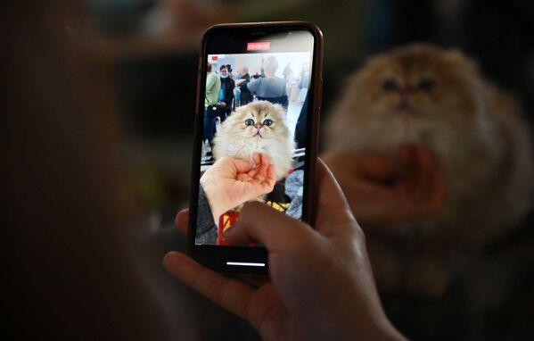 Un visitatore fotografa un gatto di razza Scottish Fold nel corso della mostra di gatti KoShariki Show svoltasi a Mosca.   - Sputnik Italia