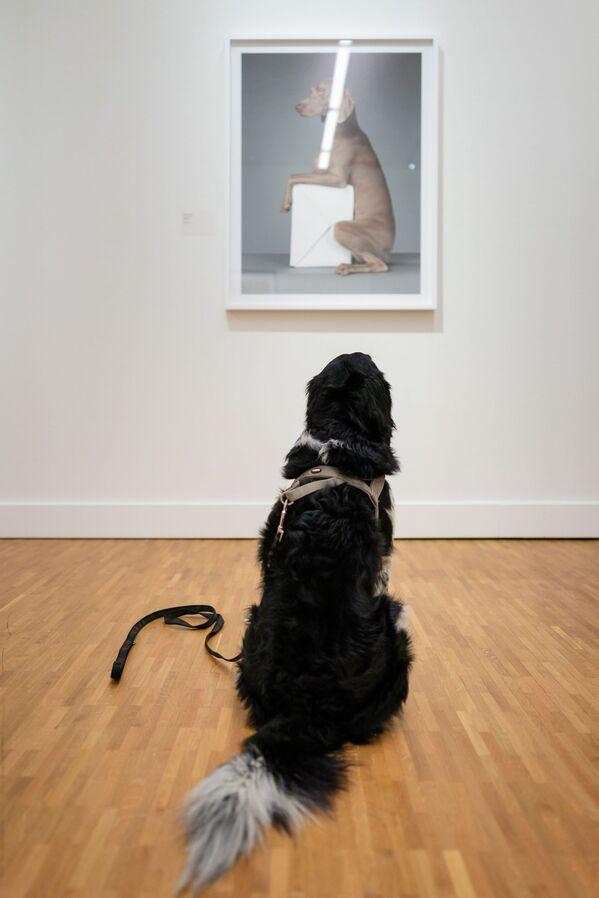 Un cane davanti a un dipinto nel Museo dell'Aia - Sputnik Italia
