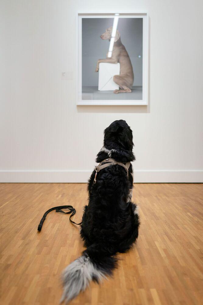 Un cane davanti a un dipinto nel Museo dell'Aia