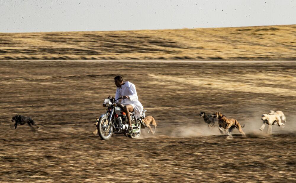 Addestramento di cani in Siria