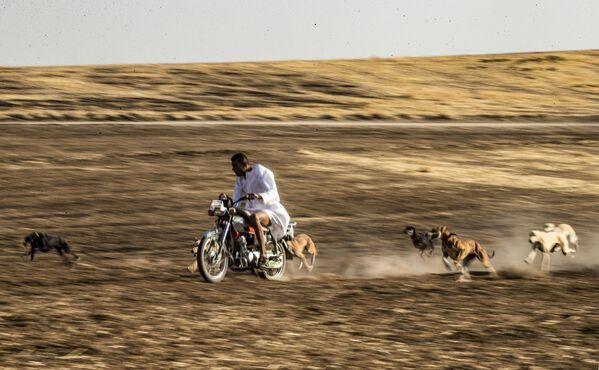 Addestramento di cani in Siria - Sputnik Italia