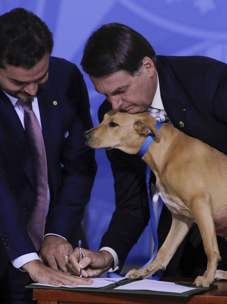 Il presidente brasiliano Jair Bolsonaro con il suo cane Nestor durante la firma di una legge che aumenta le pene per l'abuso di animali domestici, al Palacio do Planalto, a Brasilia, il 29 settembre 2020