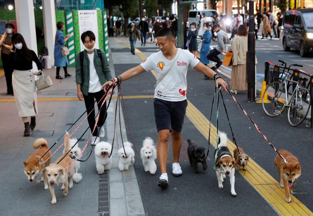 Il dog walker Nobuaki Moribe fa una passeggiata con i cani a Tokyo, Giappone, 14 ottobre 2020