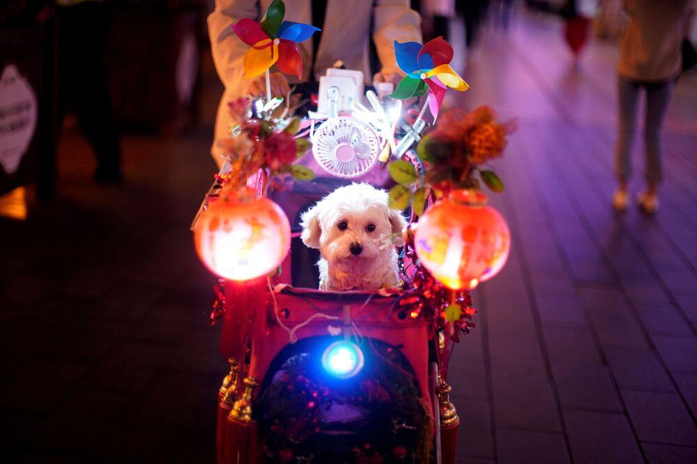 Cane in una carrozza sulla strada a Shanghai in Cina