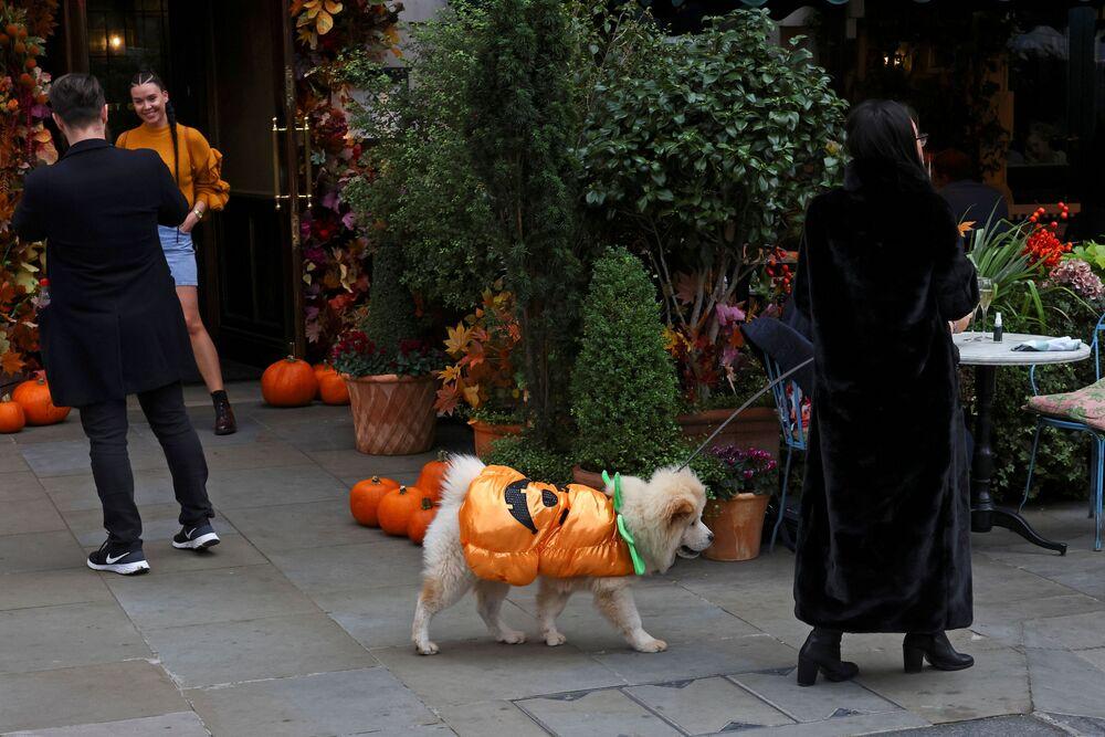 Un cane vestito da zucca a Londra