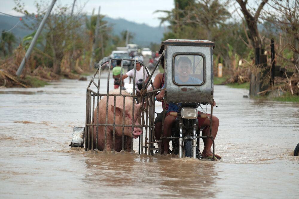 Un motociclista sta portando un maiale per una strada innondata a causa del tifone Vamco nella provincia di di Albay, Filippine, il 12 Novembre 2020.