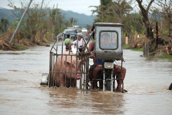Un motociclista sta portando un maiale per una strada innondata a causa del tifone Vamco nella provincia di di Albay, Filippine, il 12 Novembre 2020.  - Sputnik Italia