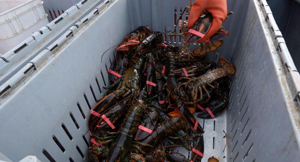 Pesca di aragoste in Canada