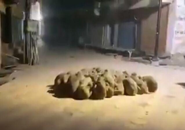 Scimmie in gruppo