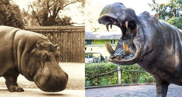 Ippopotamo Pippo con la sua statua al parco Natura Viva