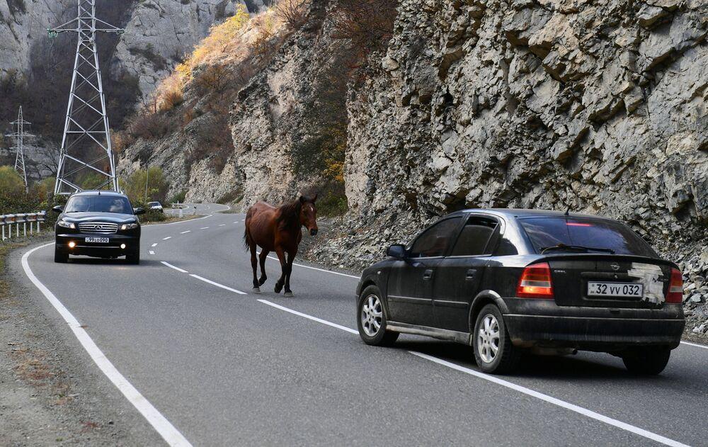 Cavallo su una strada nel Nagorno-Karabakh