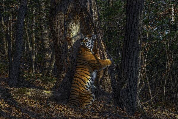 La foto del fotografo russo Sergey Gorshkov - Sputnik Italia