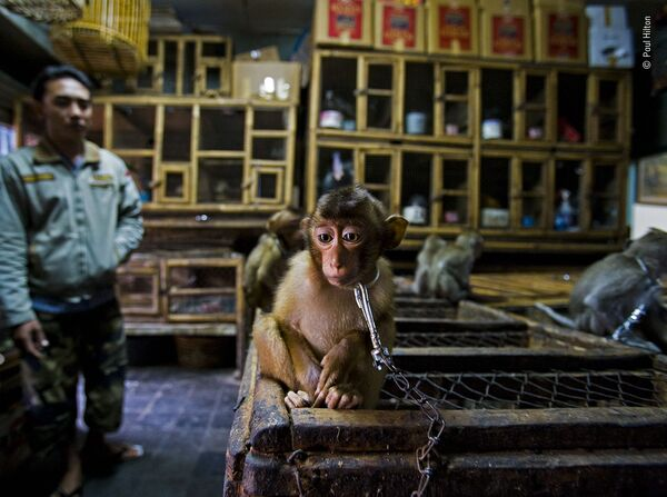 La foto del fotografo australiano-britannico Paul Hilton - Sputnik Italia