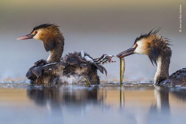 La foto del fotografo spagnolo Jose Luis Ruiz Jiménez - Sputnik Italia