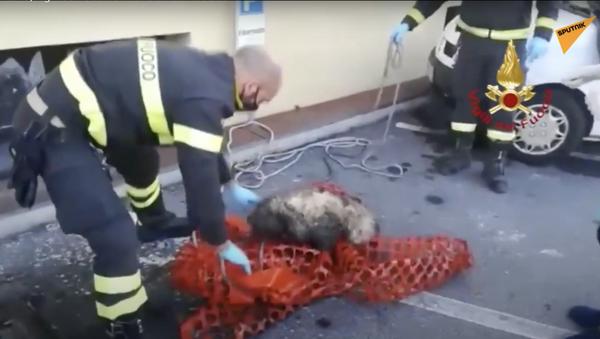 Italia, vigili del fuoco salvano un cane cieco - Sputnik Italia