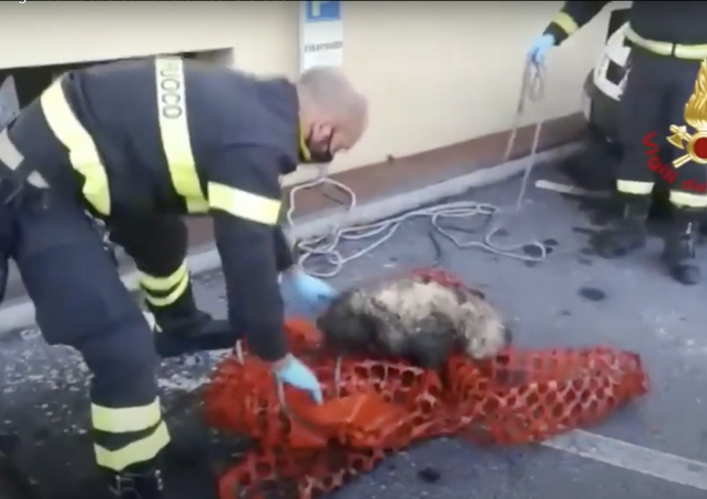 Italia, vigili del fuoco salvano un cane cieco