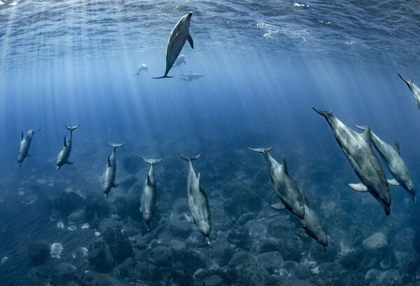 La foto del fotografo giapponese Reiko Takahashi - Sputnik Italia