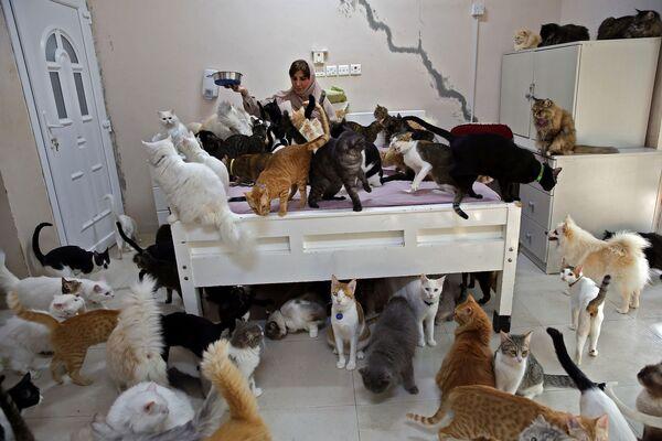 Maryam Al Balushi con i suoi animali domestici nella sua casa, Oman, il 20 novembre 2020 - Sputnik Italia