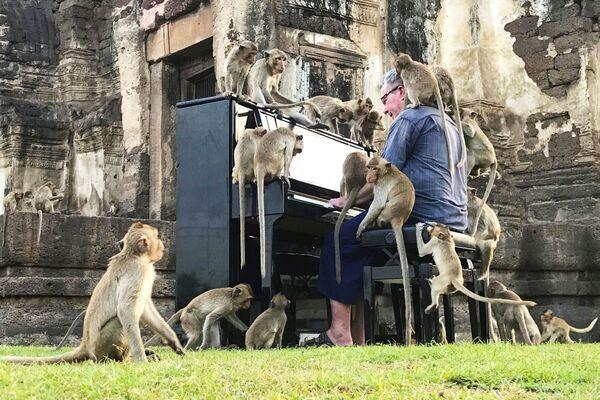 Il musicista britannico Paul Barton suona il pianoforte per le scimmie che occupano aree storiche abbandonate a Lopburi, Thailandia, il 21 novembre 2020 - Sputnik Italia