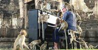 Il musicista britannico Paul Barton suona il pianoforte per le scimmie che occupano aree storiche abbandonate a Lopburi, Thailandia, il 21 novembre 2020