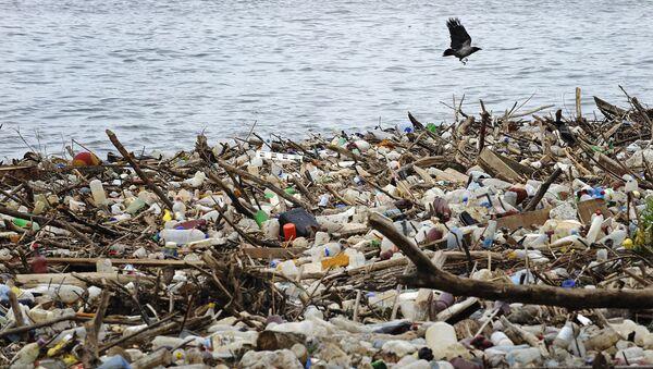 A bird flies past dumped plastic bottles and other garbage - Sputnik Italia