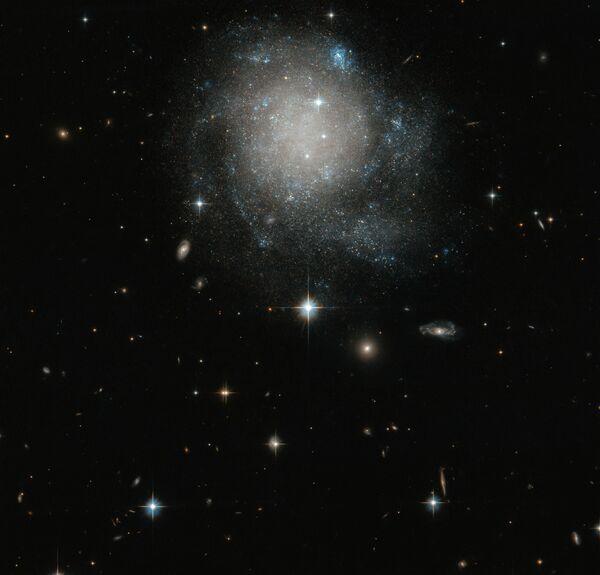 Galassia a spirale UGC 12588 nella costellazione di Andromeda. - Sputnik Italia