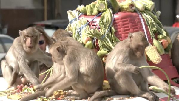Tavole imbandite per le scimmie in occasione del Monkey Buffet Festival - Sputnik Italia