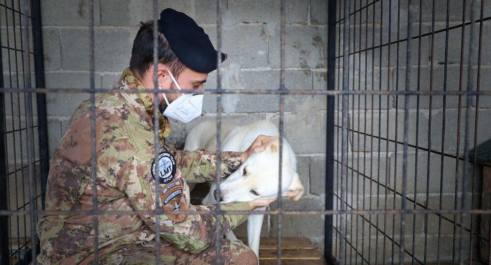 Militari italiani del Comando Regionale Ovest della Kosovo Force in aiuto ai randagi del Kosovo