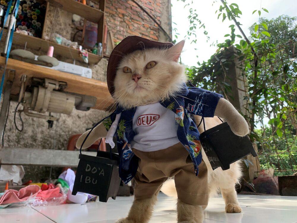 Un gatto indossa un costume cosplay, Giacarta, Indonesia, il 26 novembre 2020