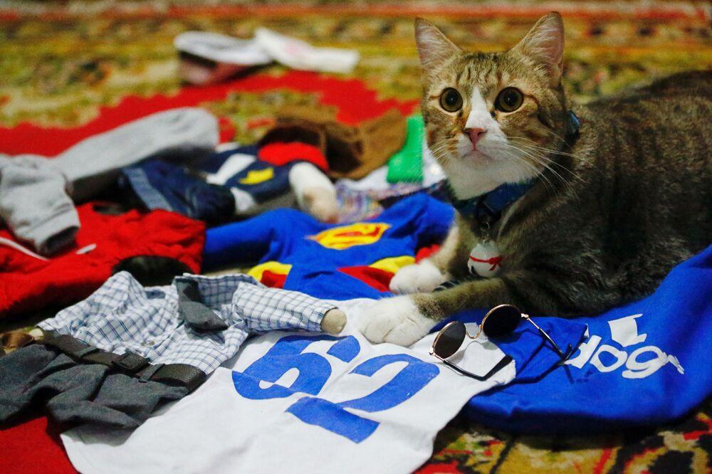 Un gatto tra i suoi costumi cosplay a Giacarta, Indonesia, il 29 novembre 2020