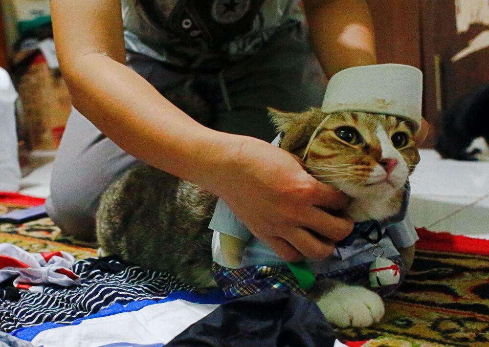 Un gatto è vestito con un costume cosplay a Giacarta, Indonesia, il 29 novembre 2020