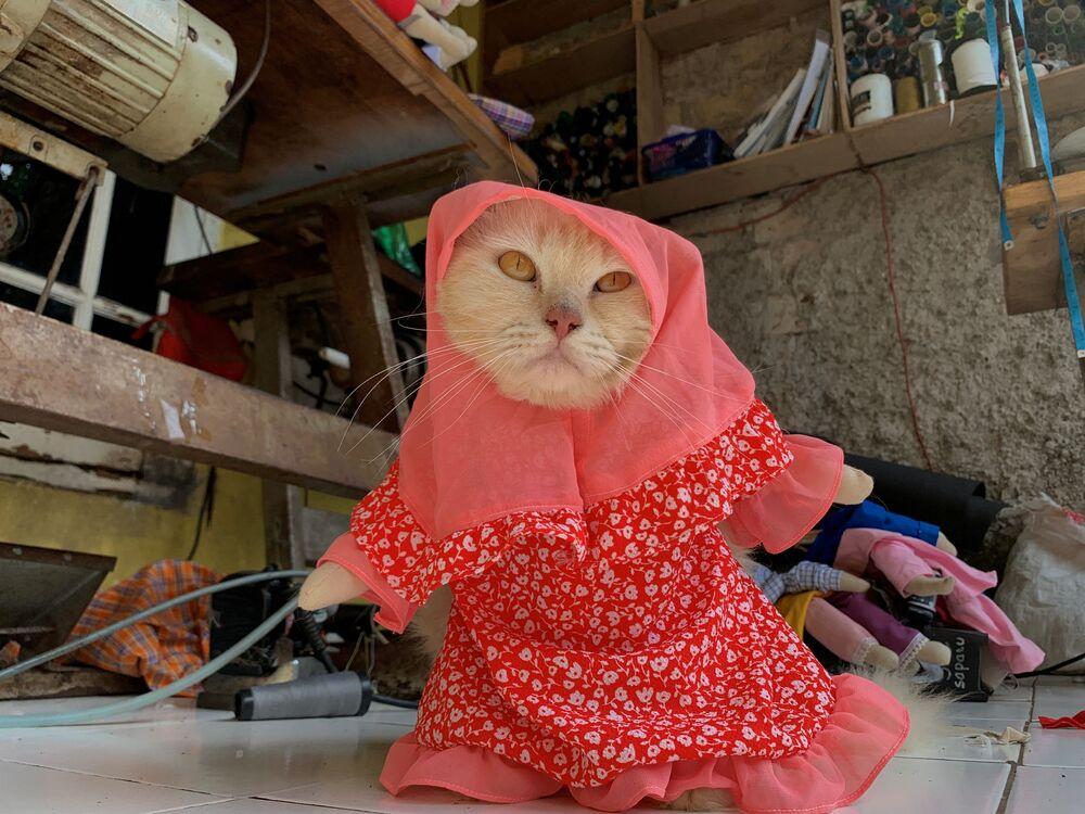 Un gatto indossa un costume cosplay con hijab a Giacarta, Indonesia, il 26 novembre 2020