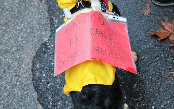 Un cane con la tabella mancu li cani durante le manifestazioni pro e contro la libreria sovranista Altaforte a Cernusco sul Naviglio - Sputnik Italia