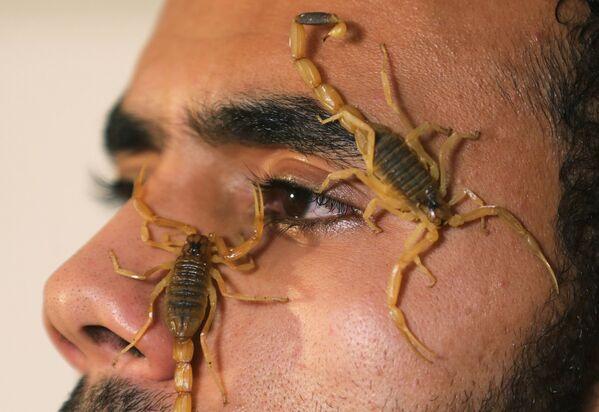 Scienziato Mohamed Hamdy Boshta con scorpioni nel laboratorio della Cairo Venom Company al Cairo - Sputnik Italia