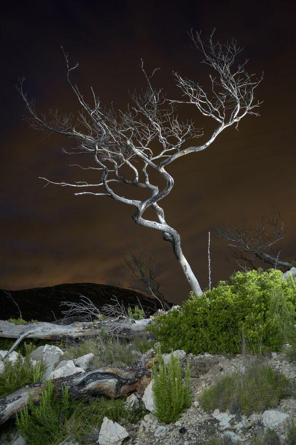 La foto del fotografo francese Charles Xelot, Earth Photo 2020 - Sputnik Italia