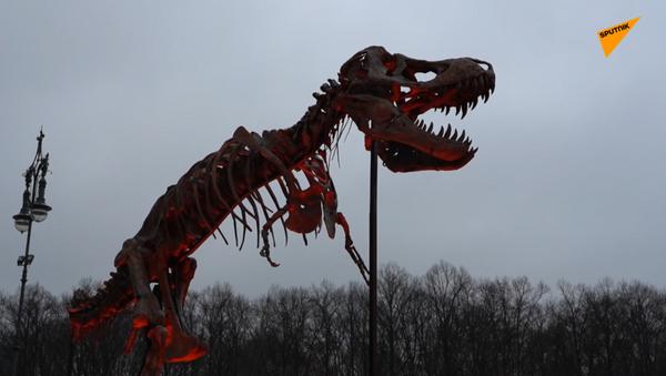 Germania, lo scheletro del T-Rex vicino alla Porta di Brandeburgo a sostegno della cultura - Sputnik Italia