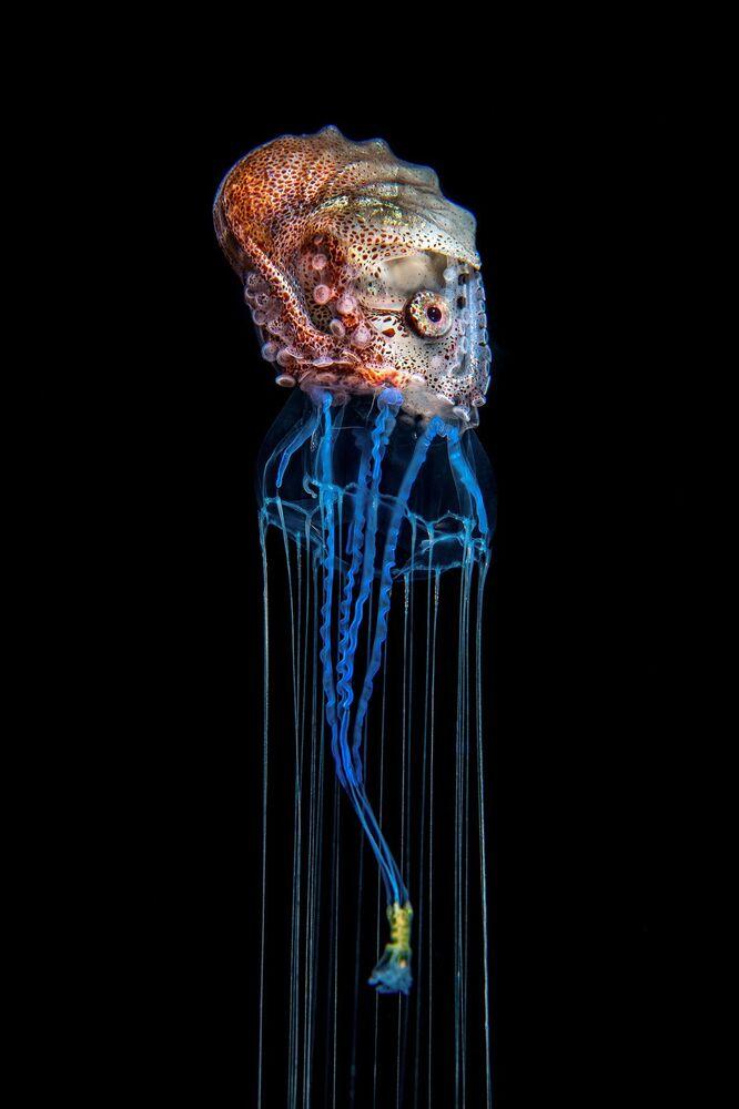 La foto The Hitchhiker del fotografo svedese Magnus Lundgren, che è stata la vincitrice del concorso Nature inFocus Photo Awards 2020 nella categoria Comportamento degli animali.