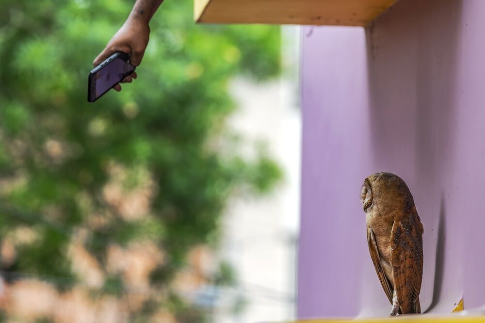 La foto La vita nella città del fotografo indiano Krishnendu Mitra, che è stata stimata nella categoria  Problemi di conservazione del concorso Nature inFocus Photo Awards 2020