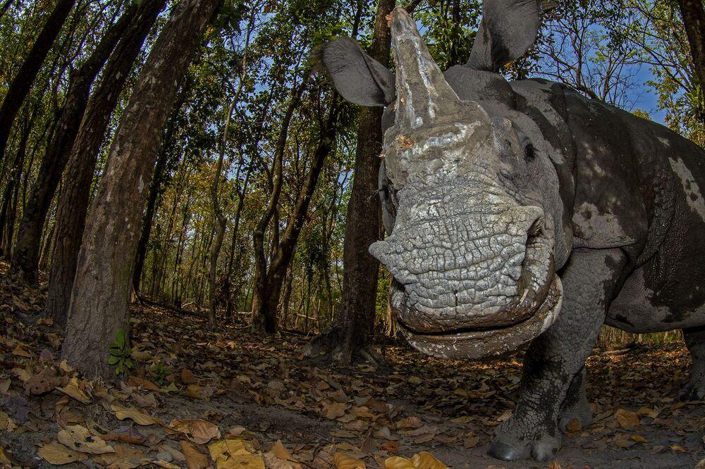 La foto Il giorno del rinoceronte del fotografo Soumabrata Moulick, che è stata seconda nella categoria Ritratti degli animali del concorso Nature inFocus Photo Awards 2020