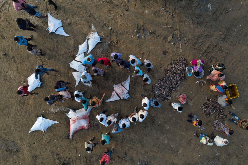 La foto Il circolo della morte del fotografo Srikanth Mannepuri, che è stata vincitrice nella categoria  Problemi di conservazione del concorso Nature inFocus Photo Awards 2020