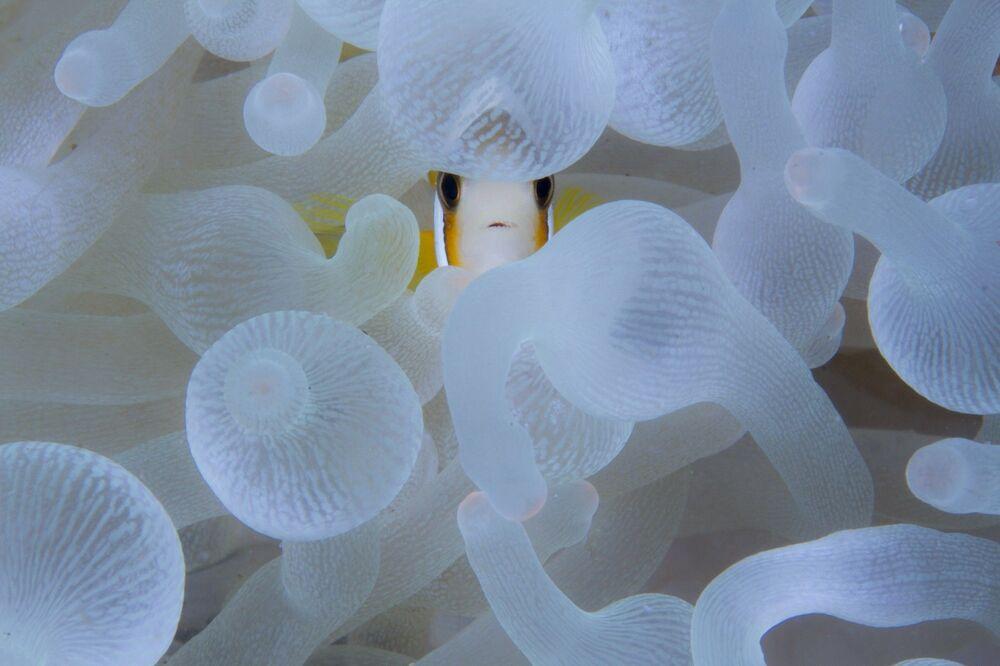 La foto A Nemo, An Anemone del fotografo Digant Desai, che è stata stimata nella categoria Paesaggi selvaggi e animali nella loro ambiente del concorso Nature inFocus Photo Awards 2020