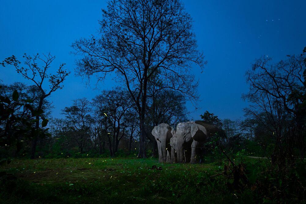 La foto Un miraggio nella notte del fotografo Nayan Jyoti Das, che è stata la vincitrice nella categoria Fotografia naturalistica creativa del concorso Nature inFocus Photo Awards 2020