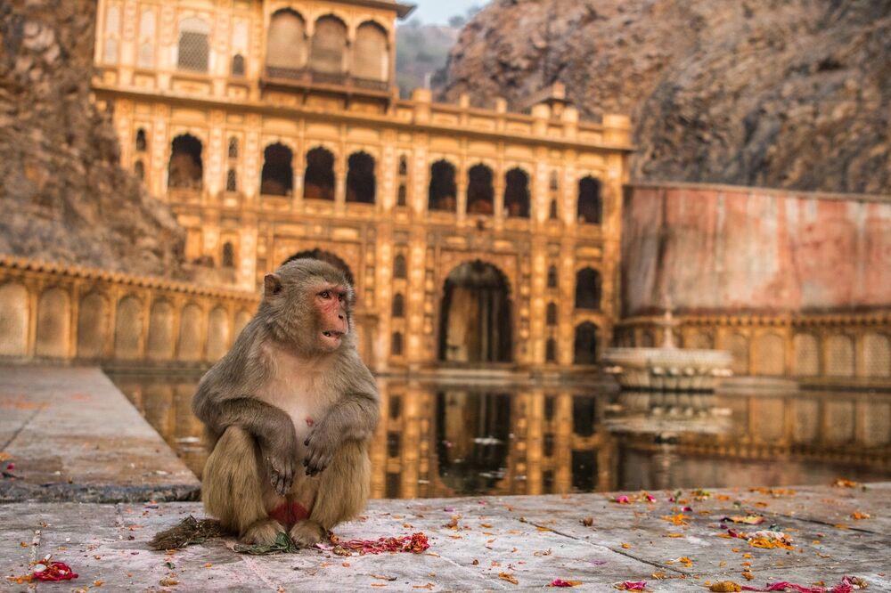 La foto Armonia nella fede del fotografo indiano Abhikram Shekhawat, che è stata la seconda classificata nella categoria Giovane fotografo del concorso Nature inFocus Photo Awards 2020
