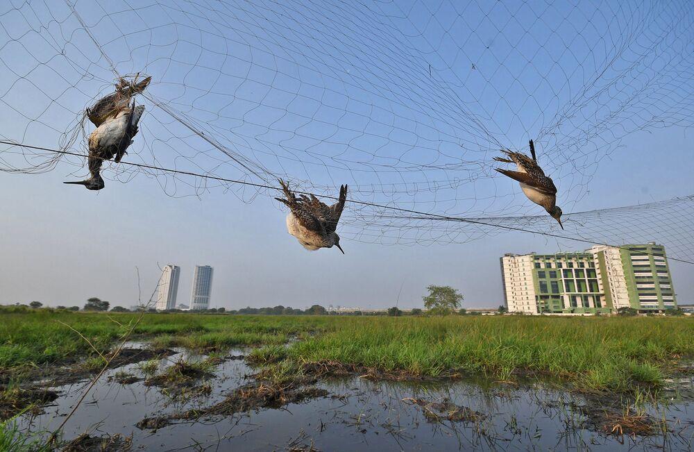 La foto Agguato Nel Cielo del fotografo indiano Abhijit Addya, che è stata stimata nella categoria Problemi di conservazione del concorso Nature inFocus Photo Awards 2020