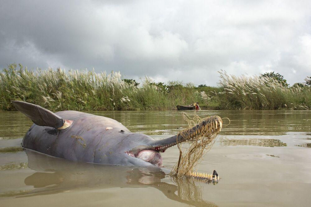 La foto Morte sul Gange del fotografo indiano Ganesh Chowdhury, che è stata stimata nella categoria Problemi di conservazione del concorso Nature inFocus Photo Awards 2020