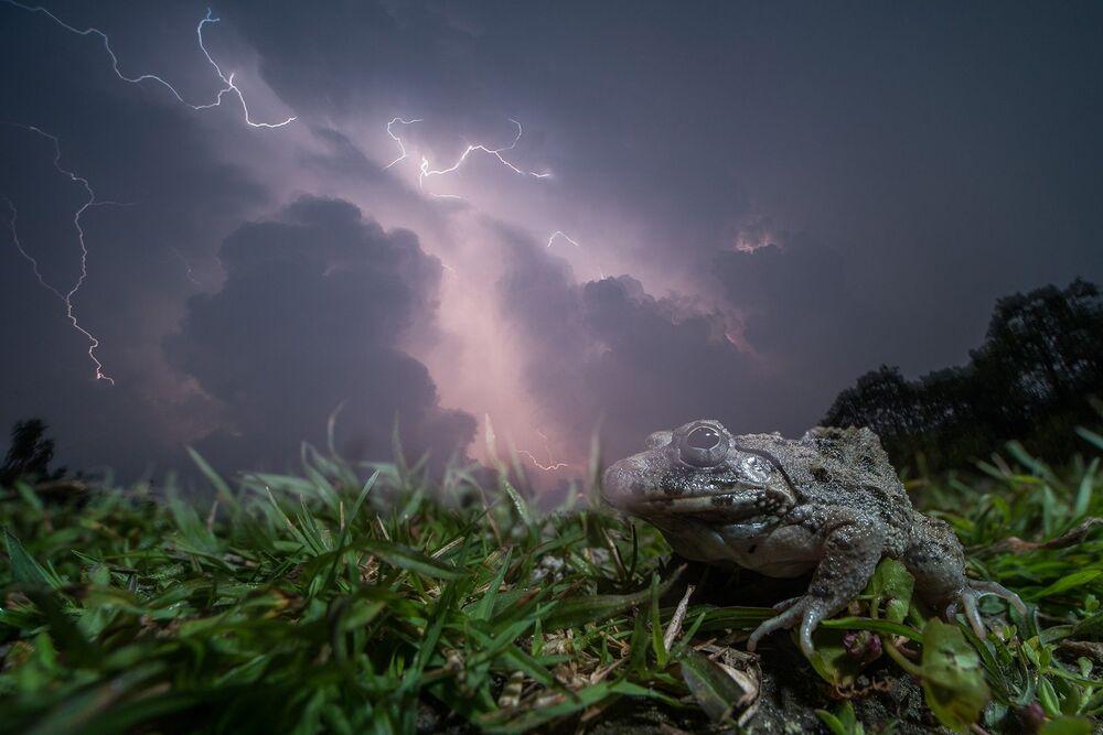 La foto Matchmaking dei monsoni del fotografo indiano Ripan Biswas, che è stata stimata nella categoria Ritratti degli animali del concorso Nature inFocus Photo Awards 2020