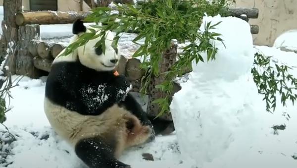 Kung Fu Panda! Un orso combatte contro un pupazzo di neve - Sputnik Italia
